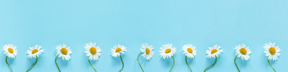 Foto op Canvas Madeliefjes Row of white chamomiles daisies flowers on pastel blue color paper background Copy space Template for postcard, lettering, text or your design Flat lay Top view