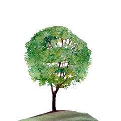 Painted Green tree watercolor illustration