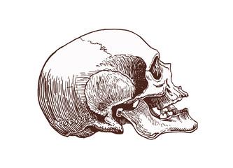 Vintage human skull, vector illustration,retro background