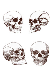 Set of vintage human skulls, vector illustration,retro background