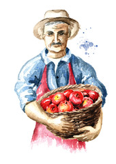 Senior farmer with freshly picked apples in basket. Watercolor hand drawn illustration, isolated on white background