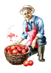 Senior farmer sits on one knee with basket full of red apples. Watercolor hand drawn illustration, isolated on white background