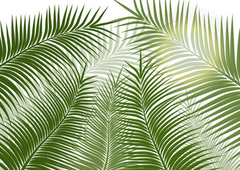 Tropical background. Realistic palm tree leaves. Exotic beauty for travel Design, promotion and marketing. Vector illustration - Vector graphics Wall mural