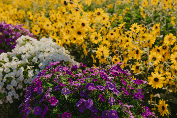 flower bed with colorful flowers