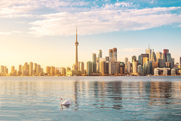 Toronto Skyline and swan swimming on Ontario lake - Toronto, Ontario, Canada