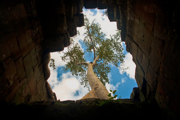 Tree growing over an underground temple.