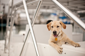 Dog looking over side of docked boat.