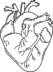 Anatomical heart. Human organ. Vector illustration.