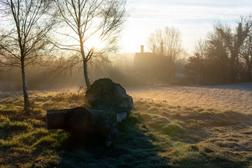 Tree trunk on a village meadow at sunrise