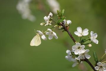 Fototapeta wiosna obraz