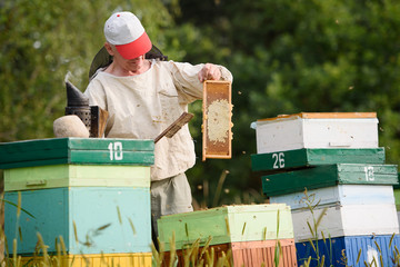 The beekeeper collects honey in the hives