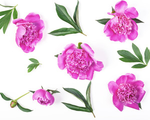 Floral pattern made of pink peony flowers and leaves isolated on white background. Flat lay. Top view.
