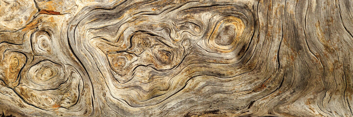 Self adhesive Wall Murals Wood Burlwood Stump