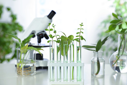 Glass tubes with plants in rack on table against blurred background. Biological chemistry