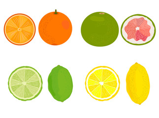 Citrus. Lemon, orange, grapefruit, lime. Vector