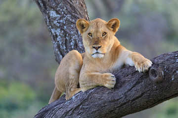 Ndutu Serenegti and Ngorongoro Safari 2019 Fototapete