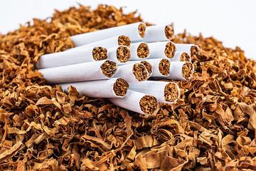 Cigarette and cut tobacco