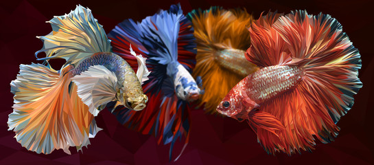Illustration  low polygonal of betta fish.