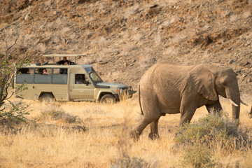 wildlife watching, Torra conservancy, Kunene Region, Namibia
