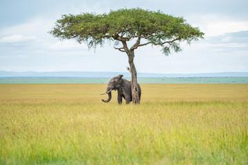 Elephant hiding under the tree  Wall mural