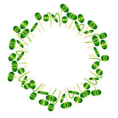 Microgreens Basil. Arranged in a circle. White background