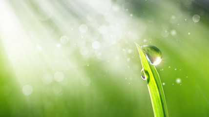Beautiful water drop sparkle in sun on grass in sunlight, macro. Spring fresh juicy green grass in droplets of morning dew outdoor, copy space. Amazing dreamy romantic image of purity of nature.