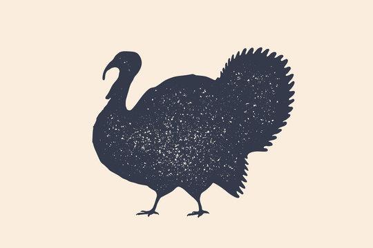 Turkey, bird. Concept design of farm animals