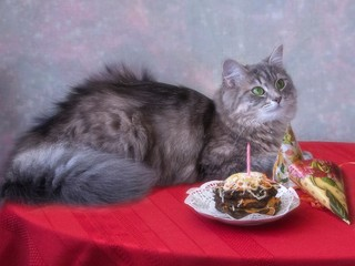 Adorable kitty's birthday