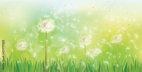 0bc198548f697 Vector spring background with white dandelions.