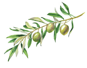 Hand drawn watercolor illustration with green olives and olive branch
