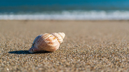 Closeup of a coiled sea snail shell, Buccinum undatum, laying on the fine grained sand under the sun with a turquoise sea in the background. Seascape in Ireland. Summer vacation concept.