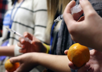 high school students practice drawing blood on oranges