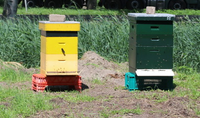 Beehives on land for natural beekeeping in nieuwerkerk aan den ijssel in the Netherlands