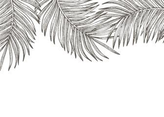 Summer tropical leaves design. Floral background illustration. Invitation or card design with jungle leaves.