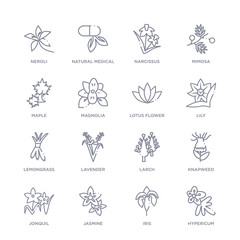 set of 16 thin linear icons such as hypericum, iris, jasmine, jonquil, knapweed, larch, lavender from nature collection on white background, outline sign icons or symbols