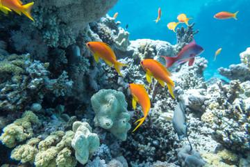 Keuken foto achterwand Koraalriffen Underwater coral reef with group of tropical fish
