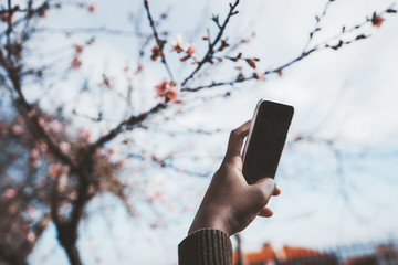 The hand of an African female with the smartphone, photographing beautiful spring flowers of blossoming sakura tree outdoors; a black girl is photographing with cellphone blossoming tree on the street
