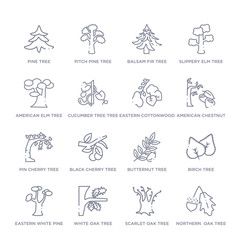 set of 16 thin linear icons such as northern  oak tree, scarlet oak tree, white oak tree, eastern white pine birch butternut black cherry tree from nature collection on white background, outline