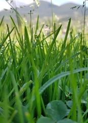 Autumn dew on the grass