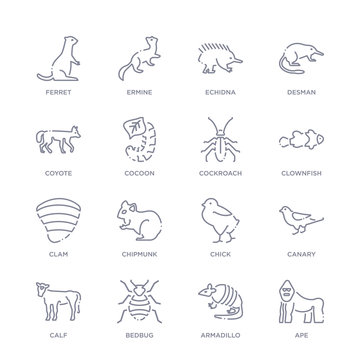 set of 16 thin linear icons such as ape, armadillo, bedbug, calf, canary, chick, chipmunk from animals and wildlife collection on white background, outline sign icons or symbols