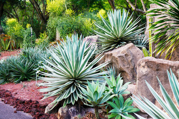 Succulents growing in a bed in a formal garden