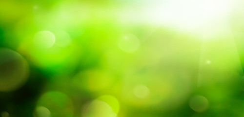 abstract, april, arrangement, background, beautiful, beauty, bloom, blossom, blur, blurred, bokeh, bouquet, bright, close-up, colorful, concept, defocused, foliage, plants, spring background, sunshine
