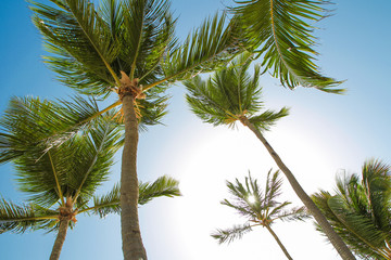 Tropical palm trees and leaves, blue sky and sun lights on background.