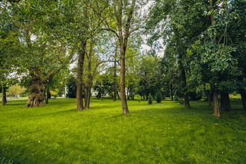 Beautiful park scene in public park with green grass field, green tree plant and a party cloudy...