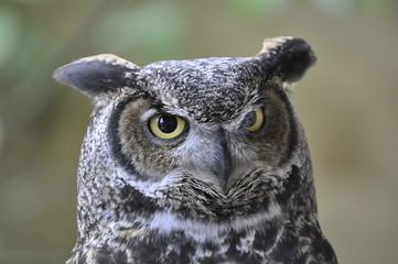 Fotobehang Uil Close Up Head of an Owl