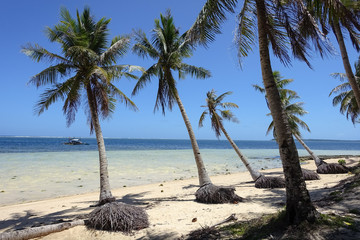 Exposed Coconut Tree Roots on eroded tropical beach - Siargao, Philippines