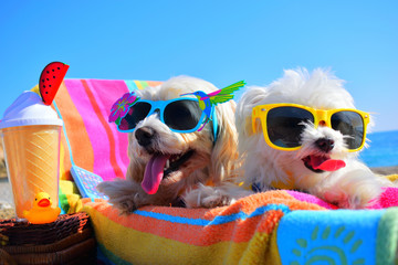 happy dogs with sunglasses Wall mural