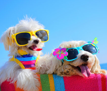 happy dogs with sunglasses