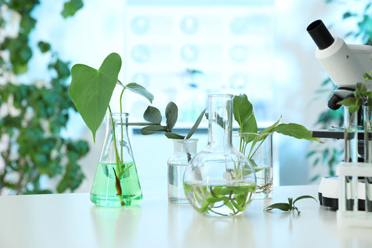 Laboratory glassware with plants and microscope on table. Biological chemistry
