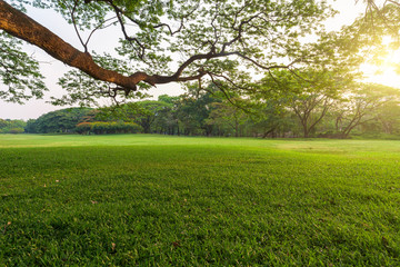 Beautiful landscape in park with tree and green grass field at morning. Wall mural